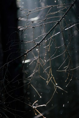 Sonnenstrahlen im Teutoburger Wald - Nadja Jacke Photography