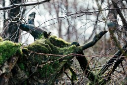 Kreaturen im Teutoburger Wald