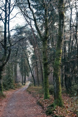 Teutoburger Wald tecklenburg Wildes Ostwestfalen