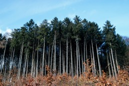 Teutoburger Wald - Wildes Ostwestfalen - Nadja Jacke