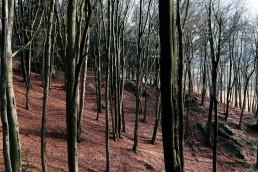 Varusfelsen im Teutoburger Wald
