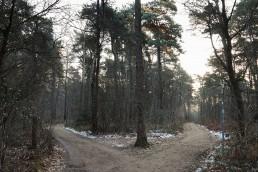 Teutoburger Wald Hermannsweg Gabelung