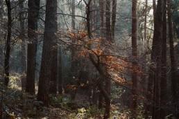 Teutoburger Wald Dörenther Klippen tanzen