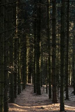 Teutoburger Wald Dörenther Klippen Soldaten