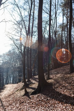 Teutoburger Wald Dörenther Klippen Wintersonne