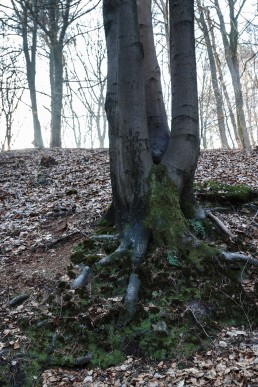 Teutoburger Wald Dörenther Klippen Rotbuche