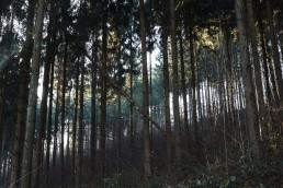 Teutoburger Wald Dörenther Klippen