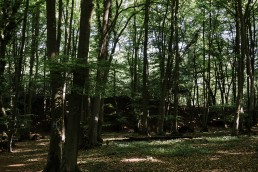 Mai im Teutoburger Wald im Münsterland.