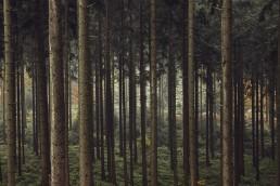 Wildes Ostwestfalen - Prolog