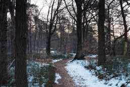 Hermannsweg - Teutoburger Wald Januar 2017