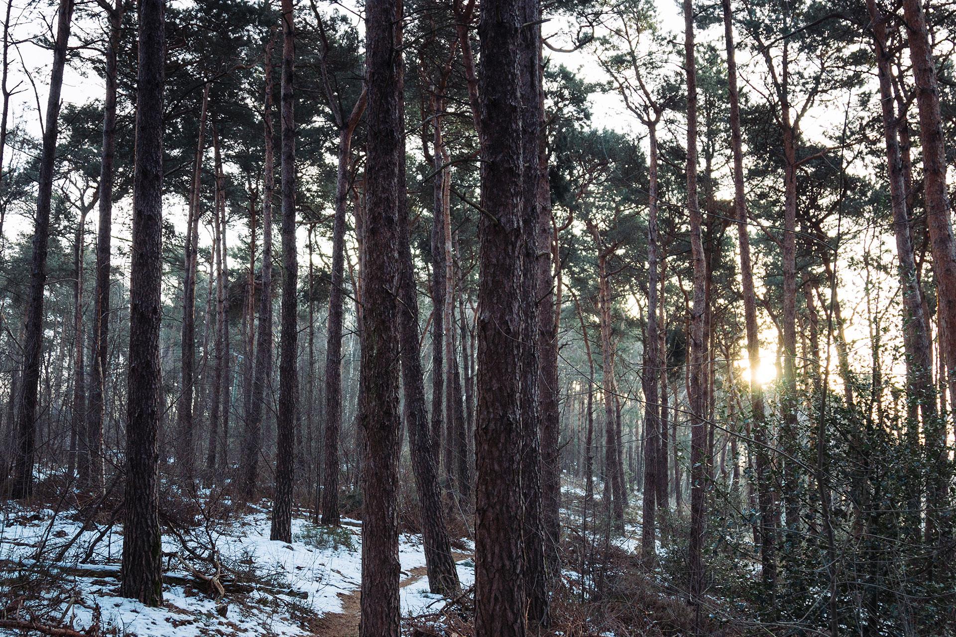 hermannsweg - Teutoburger Wald in der Wintersonne