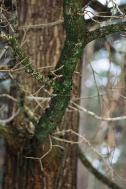 Grün im Teutoburger Winterwald