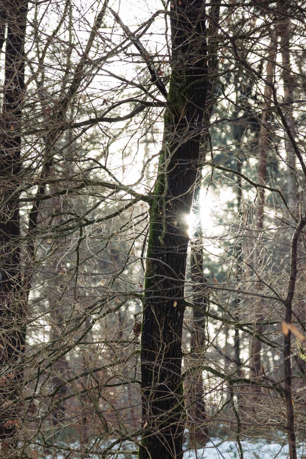 Winterlicht im Teutoburger Wald