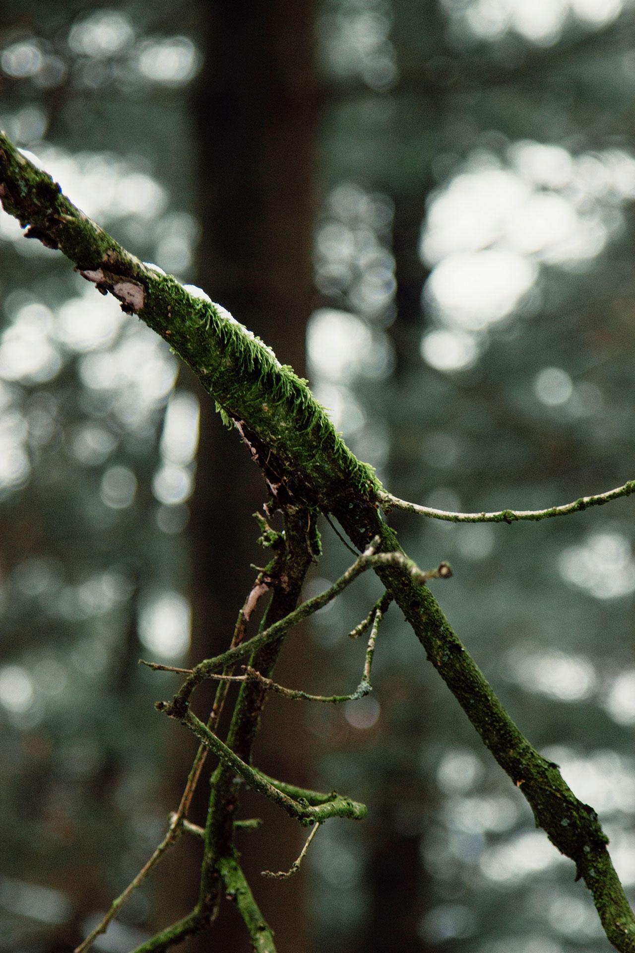 Teutoburger Wald Wildes Ostwestfalen