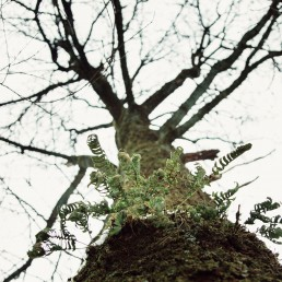Baum und Farn - Teutoburger Wald
