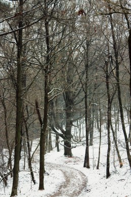 Buche im Teutoburger Wald