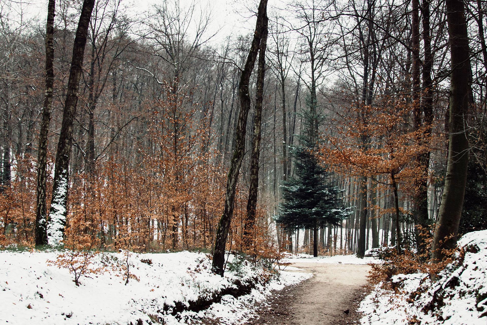 Teutoburger Wald Riesenbeck