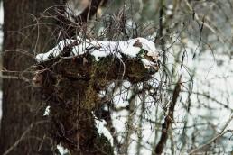 Fantasiegebilde im Teutoburger Wald