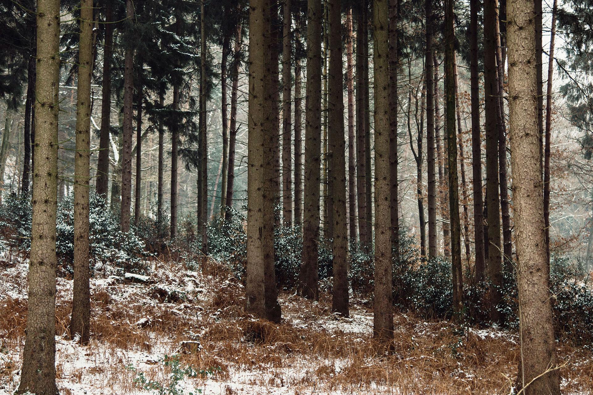 Teutoburger Wald Nähe Dörenther Klippen