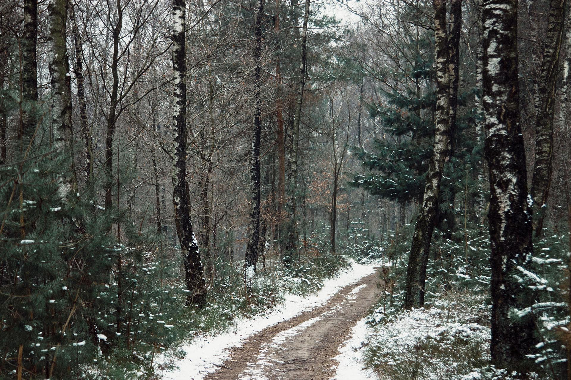Teutoburger Wald im Winter mit Schnee